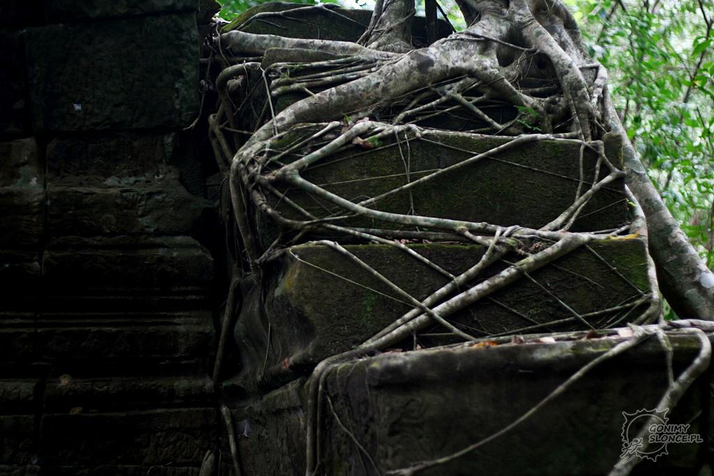 Beng Melea i porastające ją drzewa
