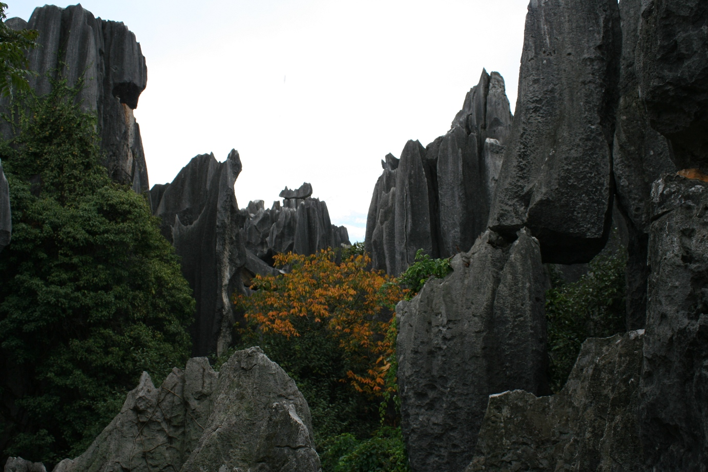 Stone Forest 2