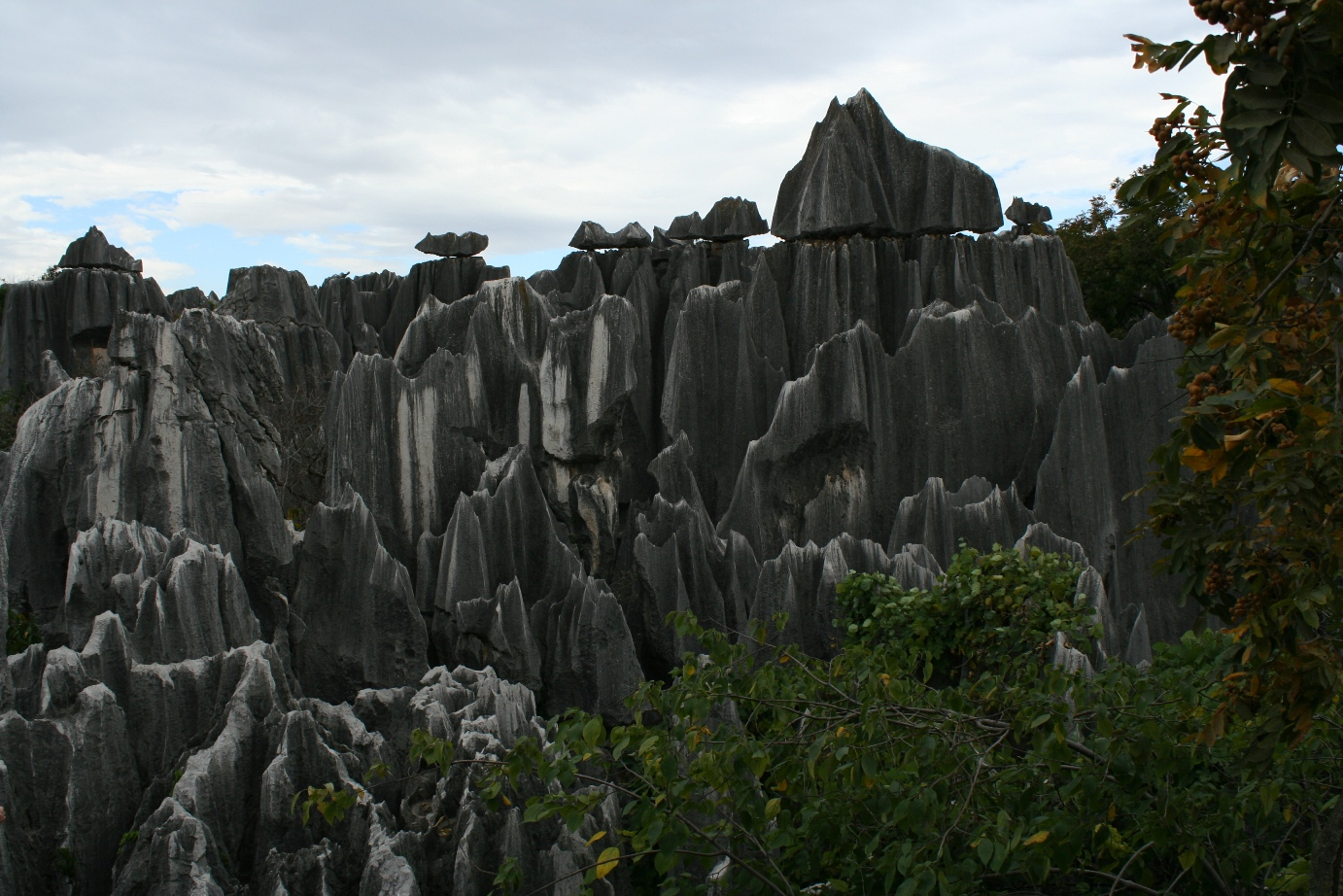 Stone Forest 8