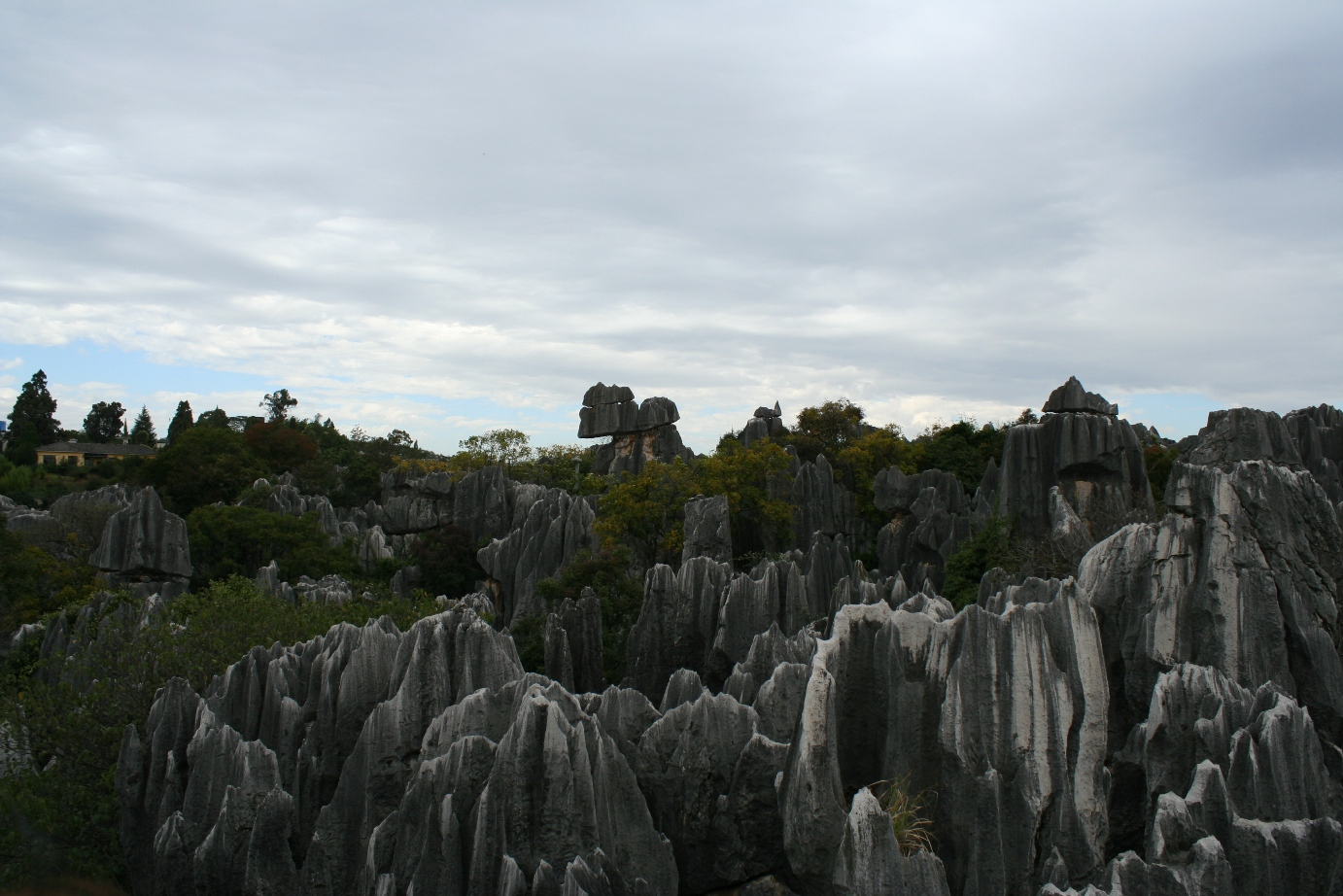 Stone Forest 10