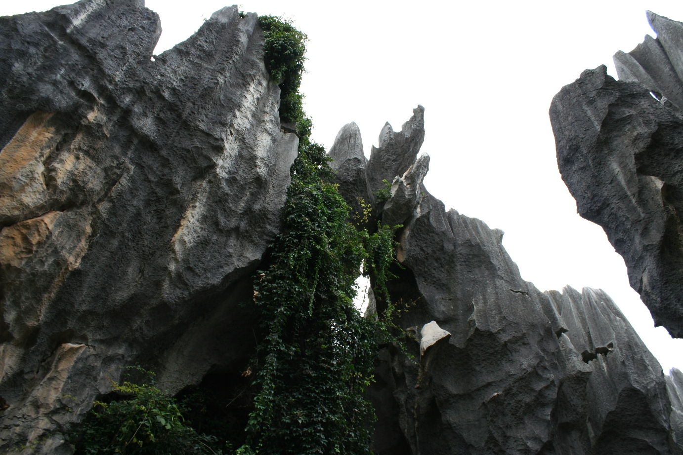Stone Forest 11
