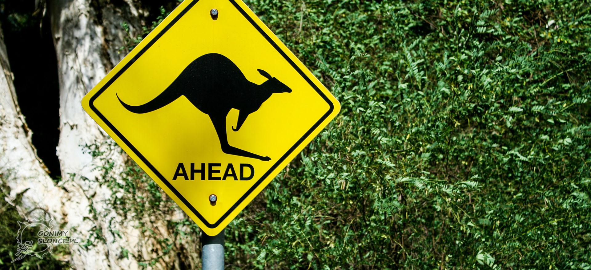 Kangur na drodze, Australia