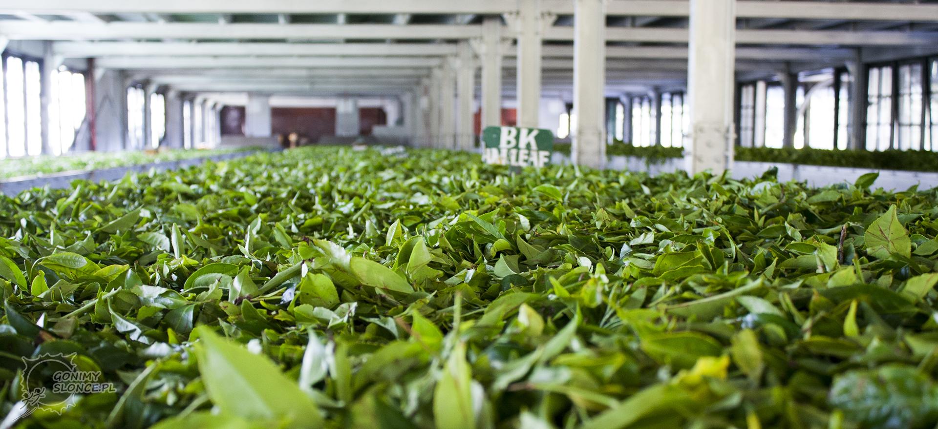 Sri Lanka, fabryka herbaty