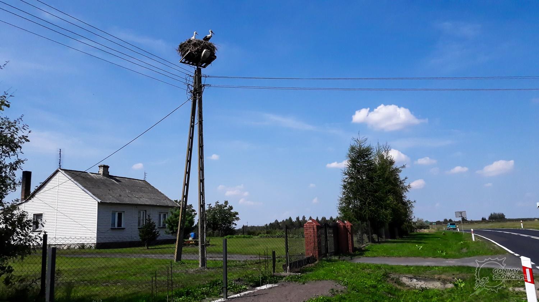 Bociany, Polska, Lubelskie, Green Velo