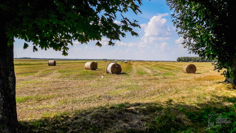 Polska niezwykła, pola przy Green Velo