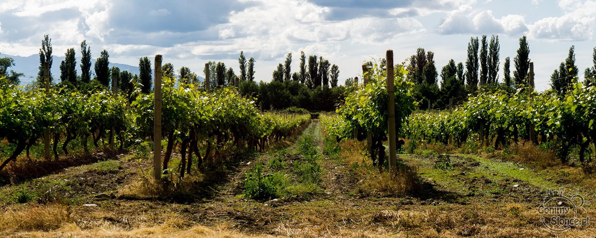 Winnice w Gruzji, Kachetia