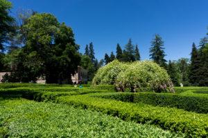 Ogrody Czawczawadzego, drzewo życzeń, Gruzja