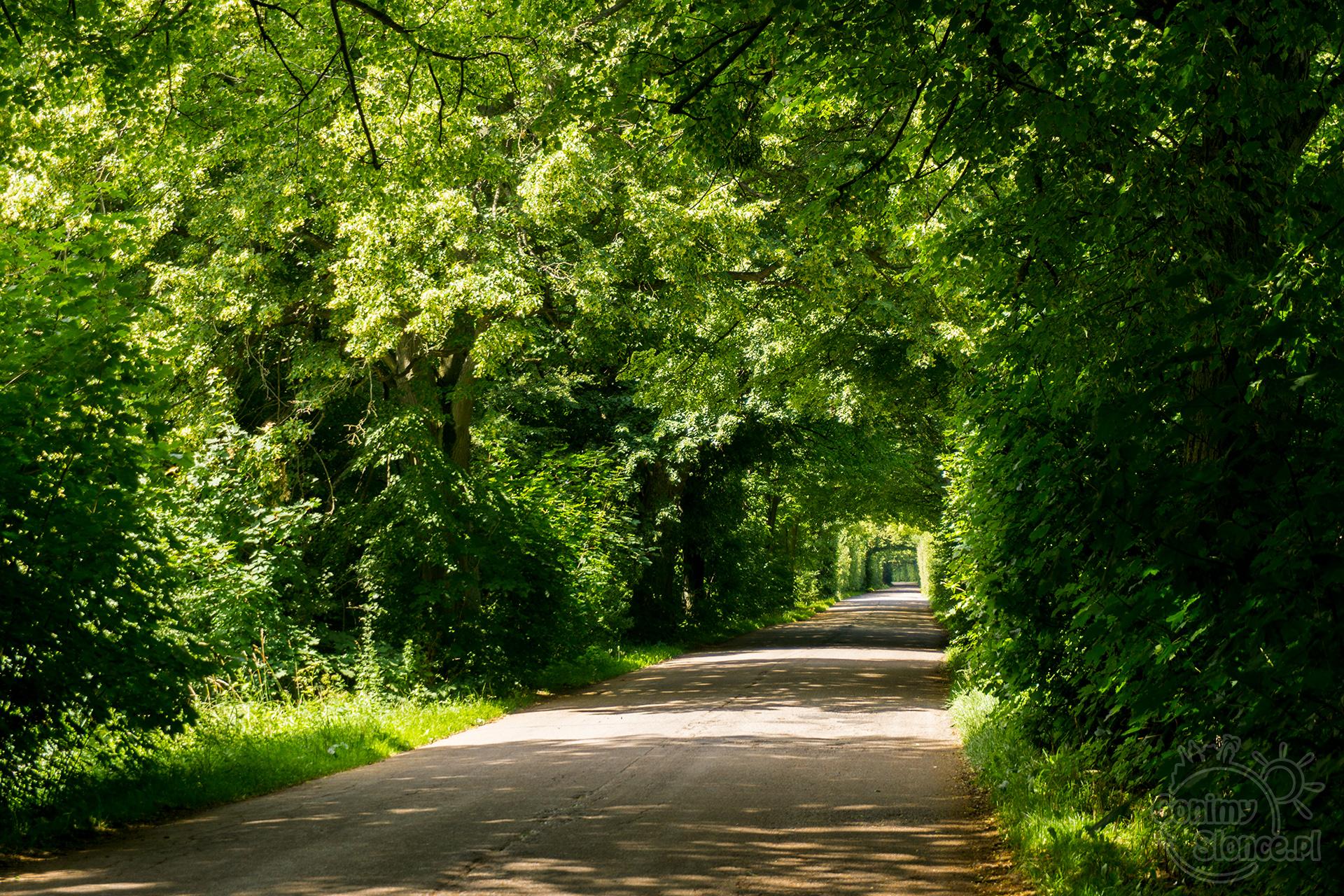 Droga Miłomłyn-Zalewo malownicze tereny rowerowe