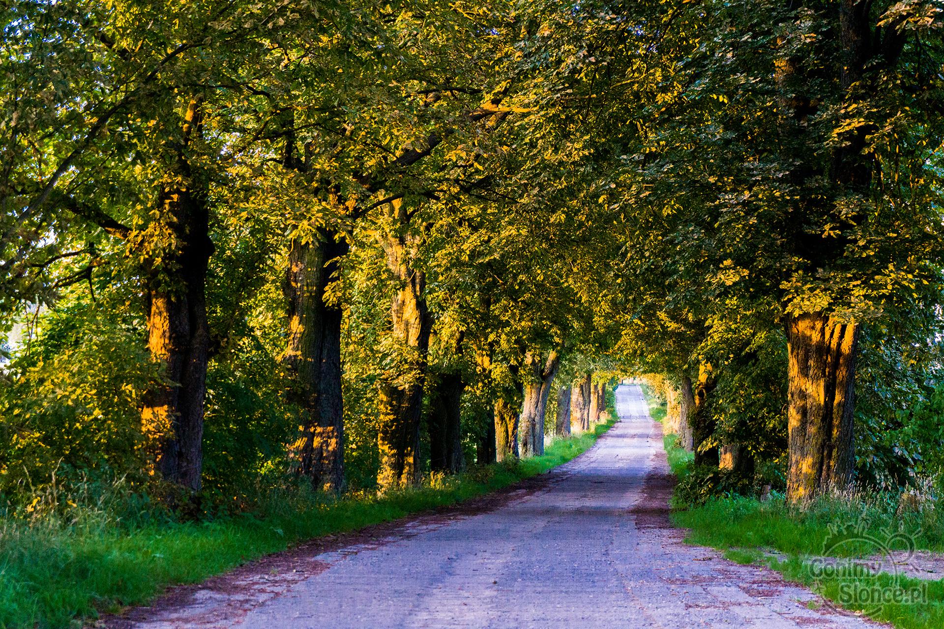 Tunel drzewny - piękna Polska - trasy rowerowe