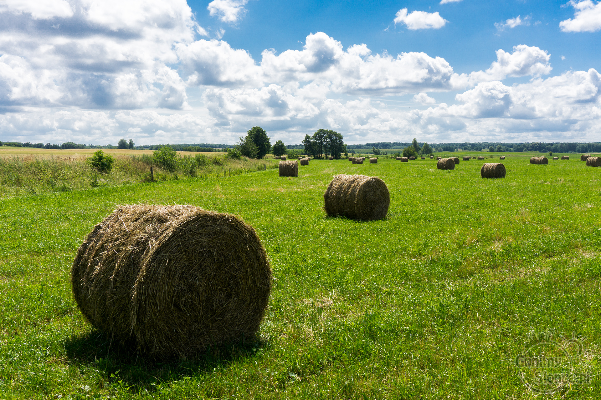 Polska latem - krajobraz naszej ziemi