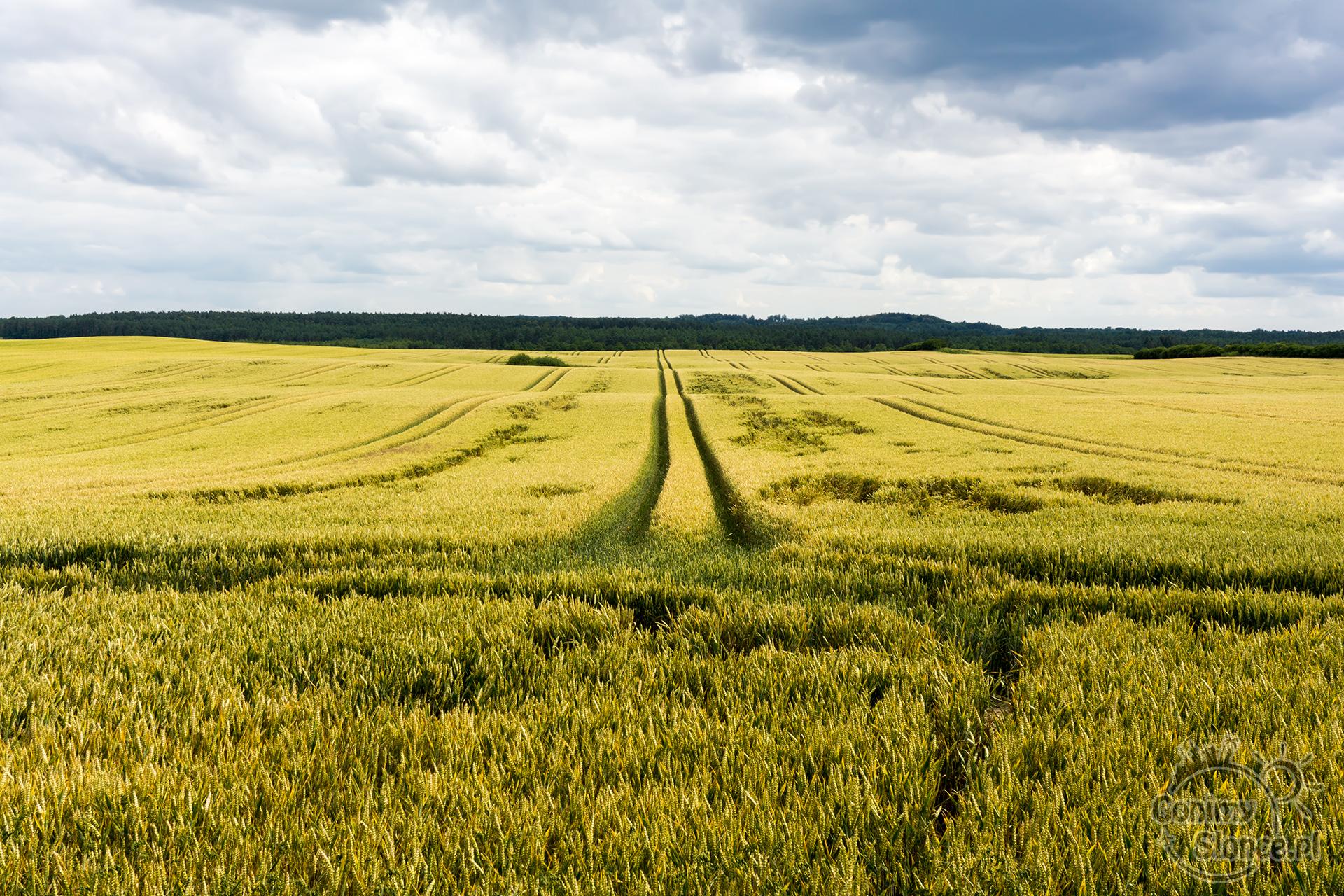 Letnie pejzaże na polskiej ziemi
