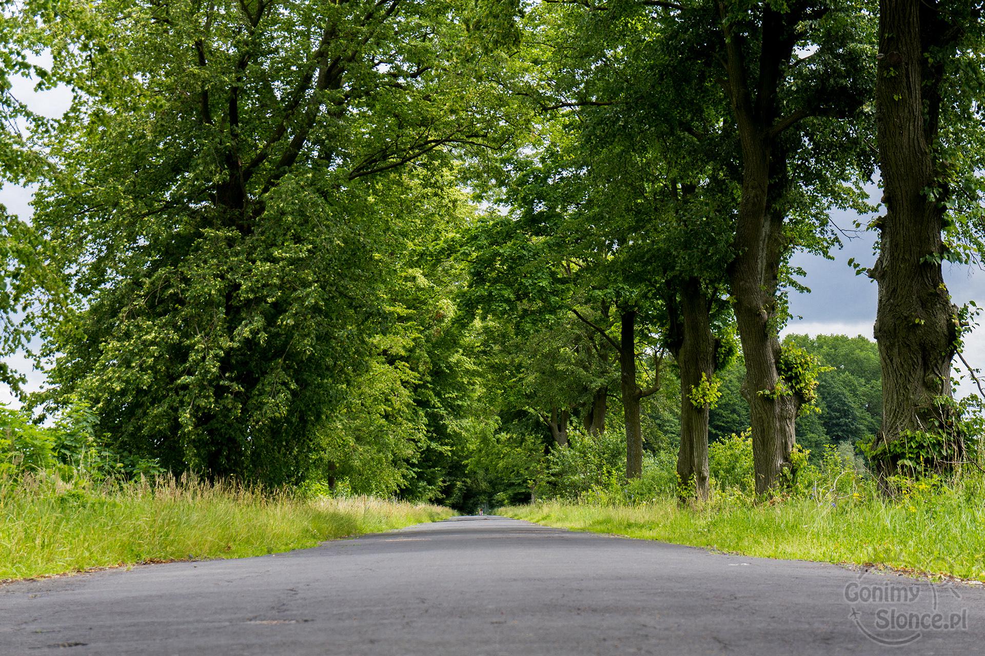 Droga pośrodku niczego, magiczne zakątki w Polsce
