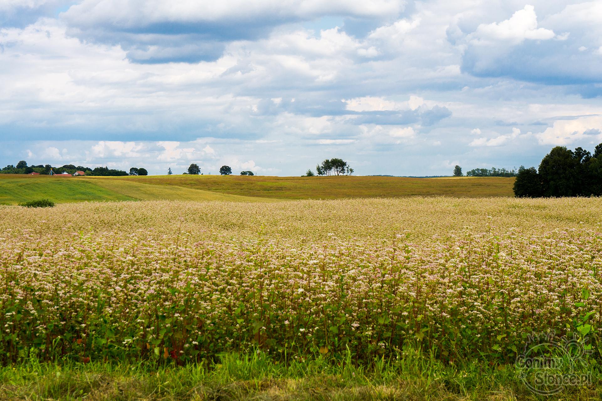 Letnie pejzaże w Polsce