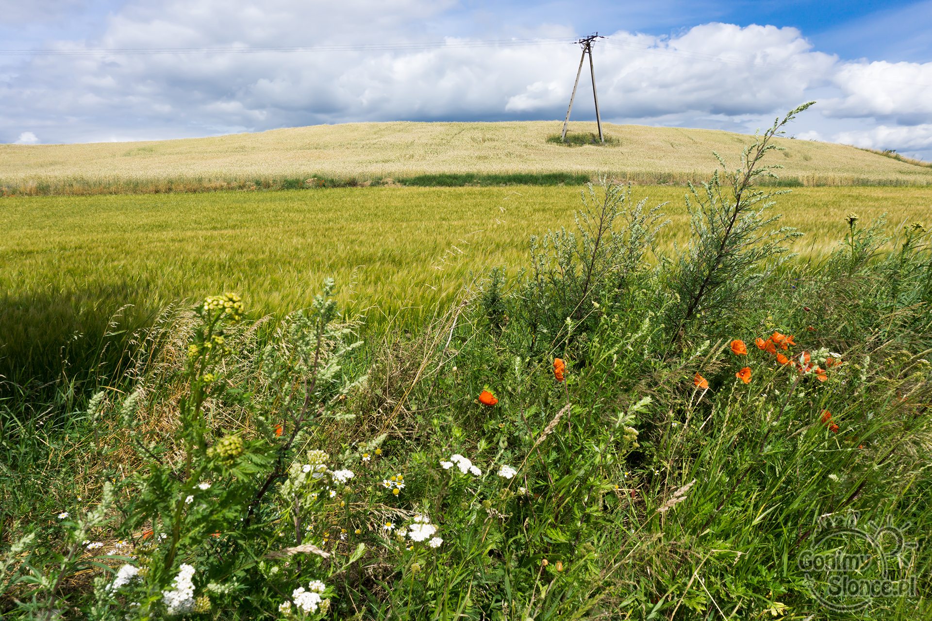 Polskie kwiaty, lato w Polsce, trasy rowerowe