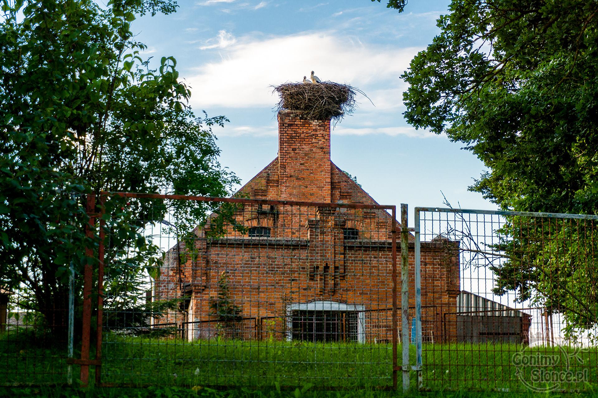 Bociany i budynek z twarzą, Polska