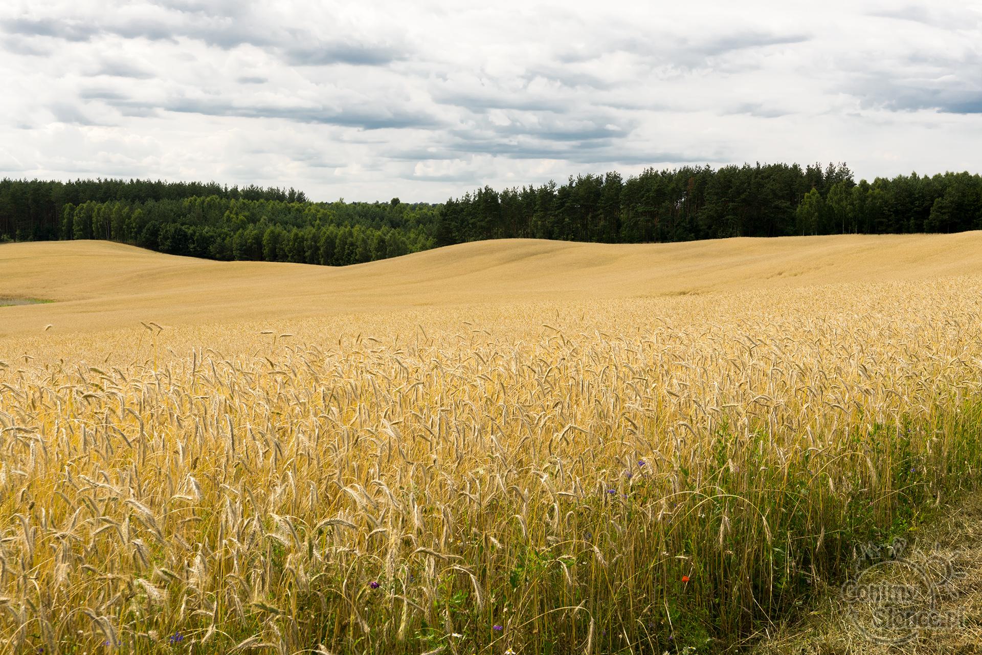 Uroki pół i lasów w Polsce