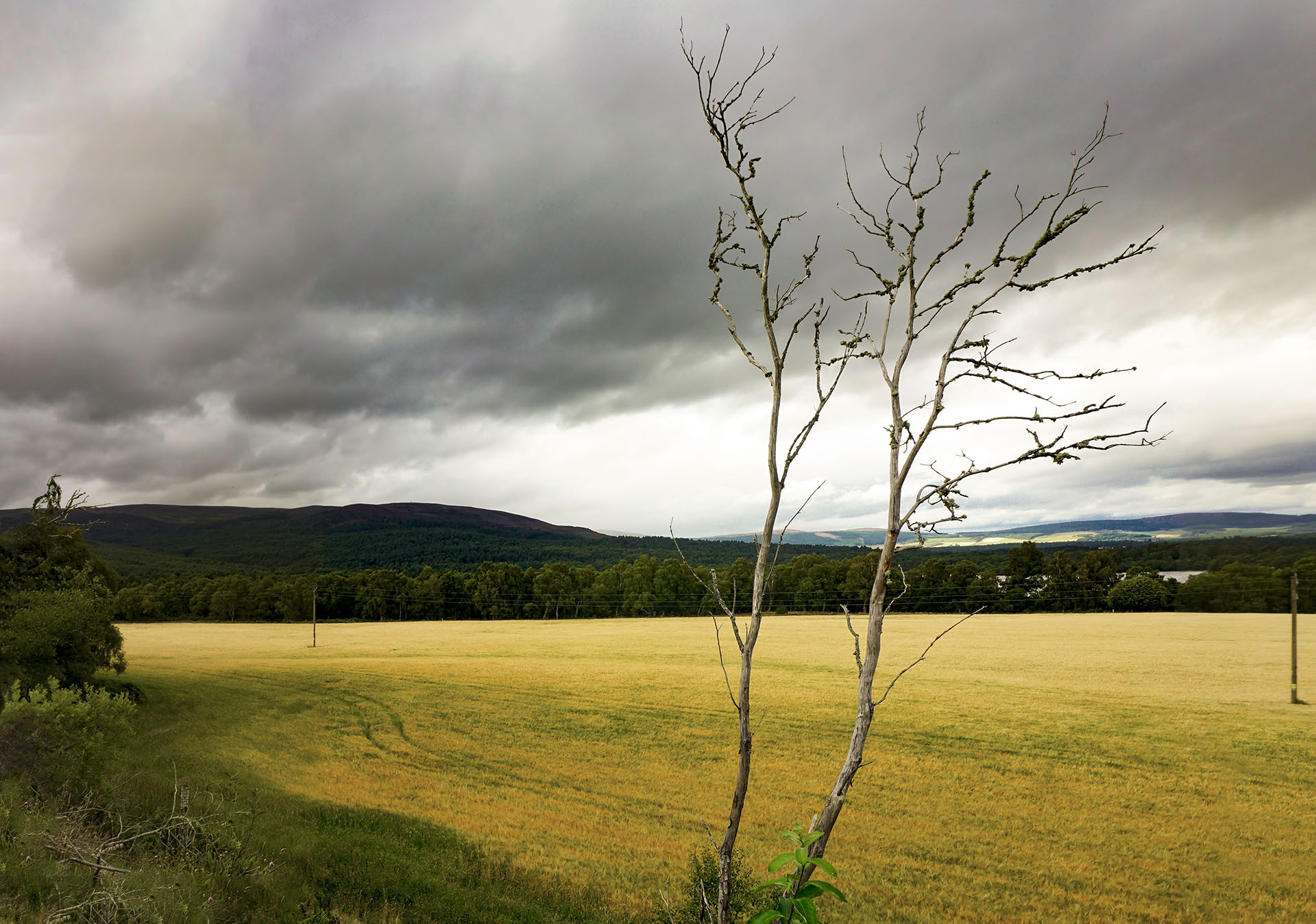 Szkocji pejzaż, martwe drzewo, pogoda w Szkocji