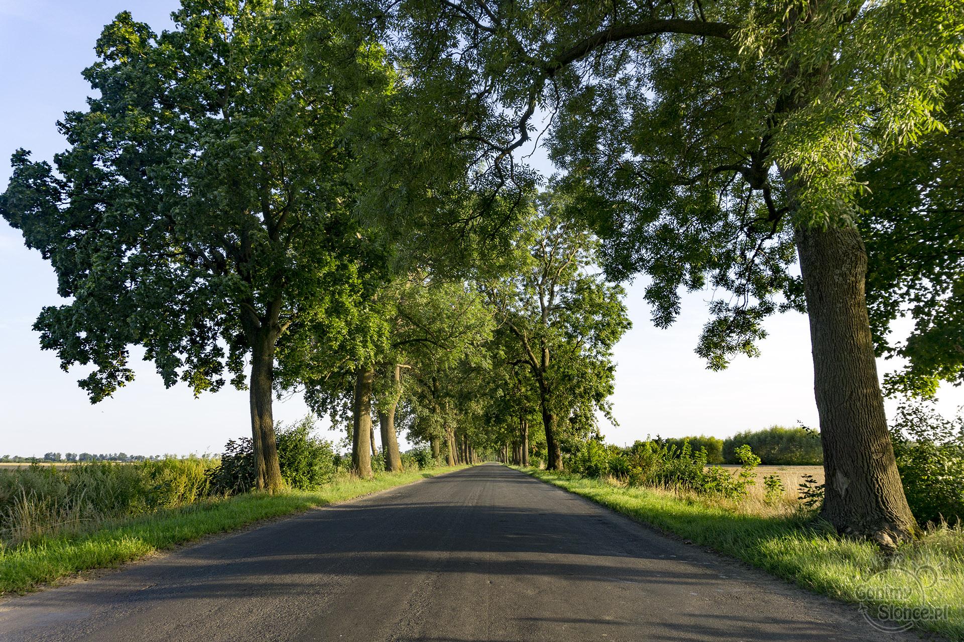 Żuławy Wiślane, aleja drzew