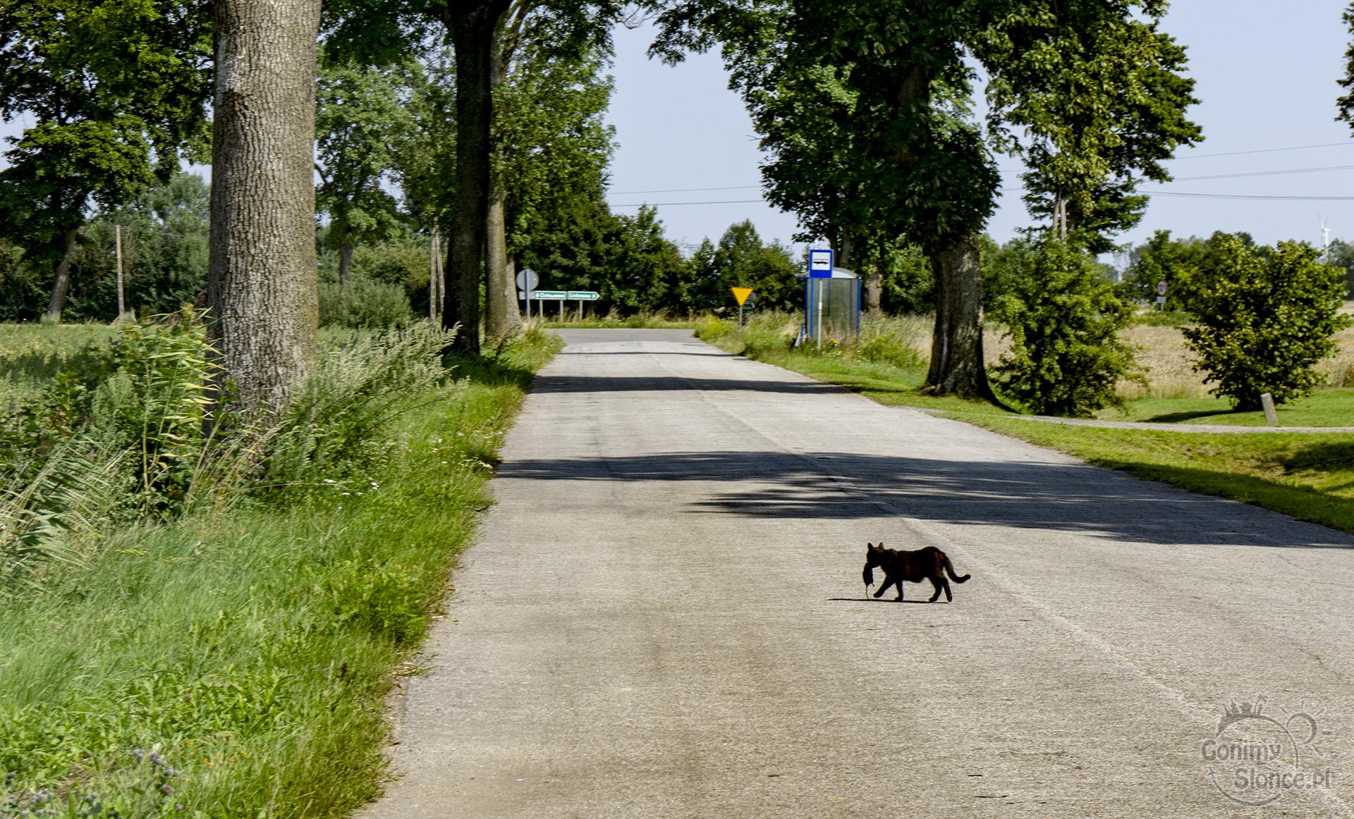 Kot upolował mysz - Żuławy i wiejskie życie