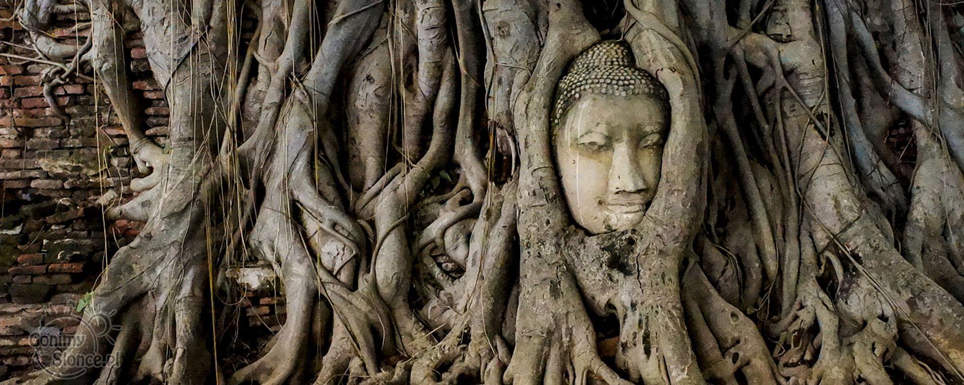 Ayutthaya Głowa w konarach drzewa, Tajlandia - czy warto?